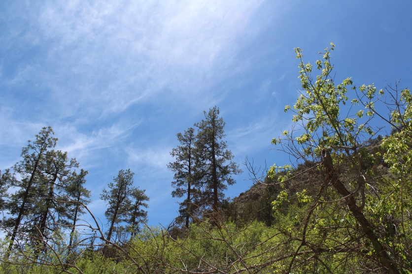 backcountry 2, Bandelier National Monument, New Mexico