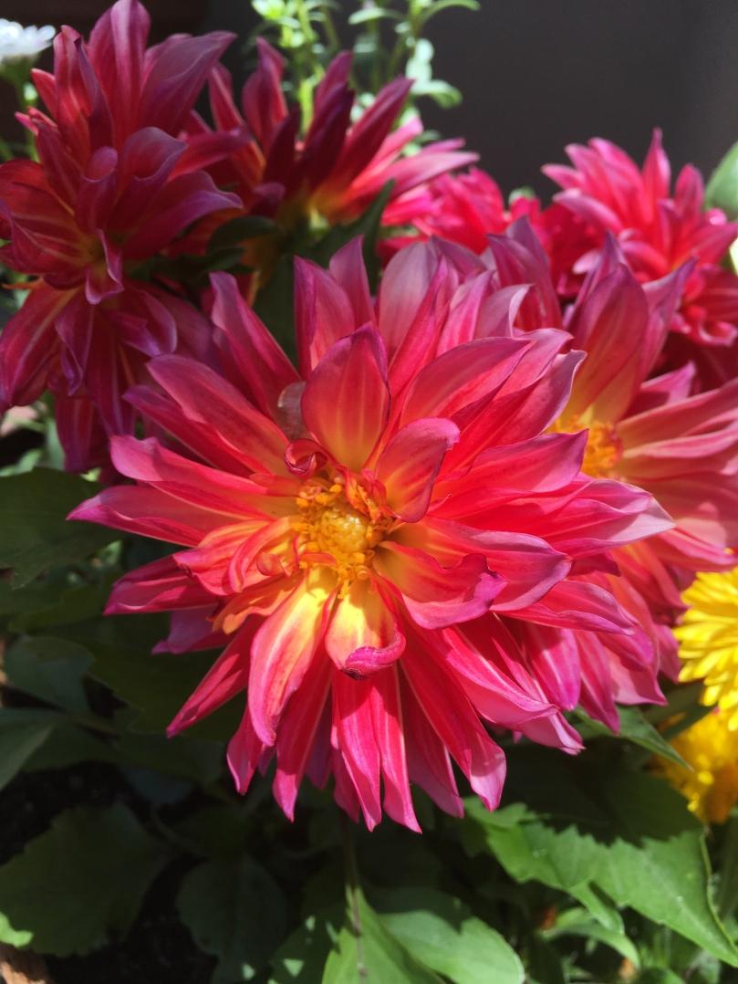 Flower, Santa Fe, New Mexico